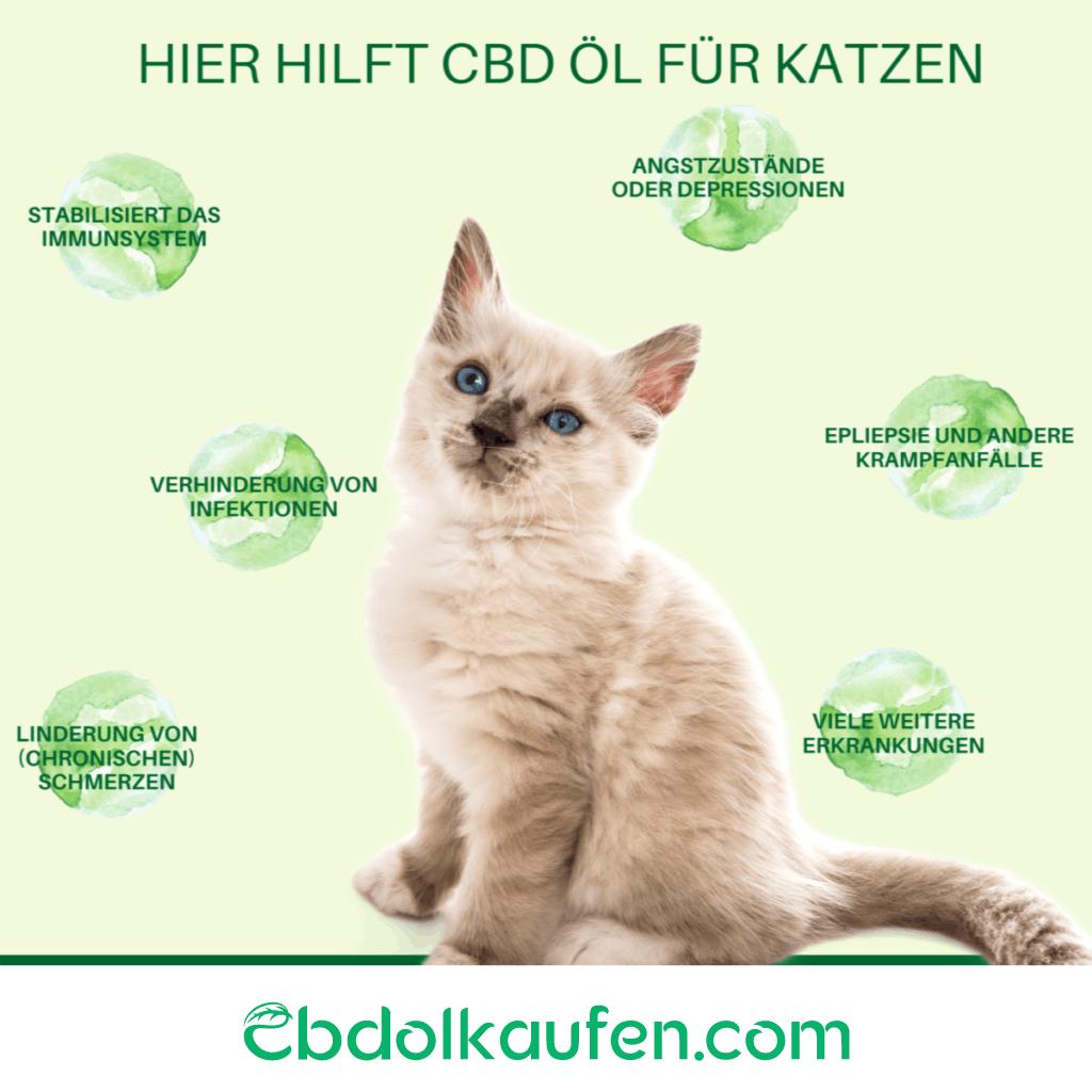 CBD Öl Katzen hier hilft cbd öl für katzen